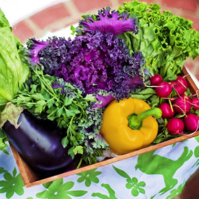 Healthy Eating, Healthy Aging – Part 2