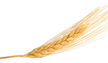 Diet Myth: Going Gluten-Free Will Help You Lose Weight